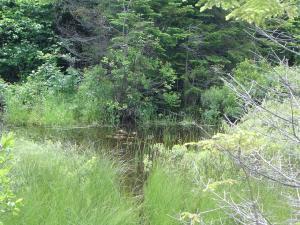 Pond full of vegetation
