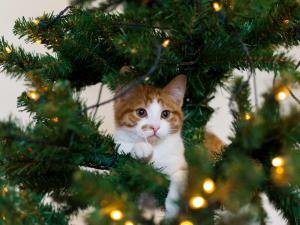 Kitten in the branches of a Christmas tree