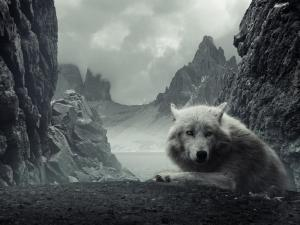A white wolf in the mountains