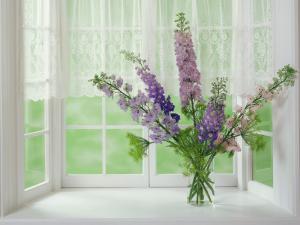 Wild purple flowers next to a window