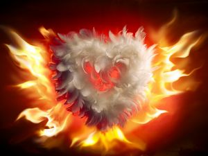 Heart of feathers on fire