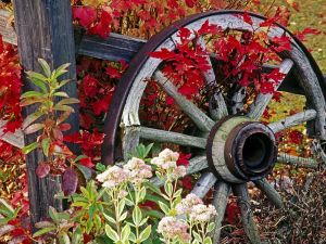 An old wheel of a wooden cart