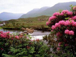 The Bundorragha River (Ireland)