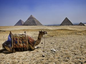 Camel in front of the Pyramids of Egypt