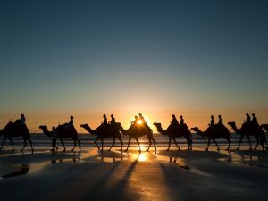 Caravan of camels on the beach at sunrise