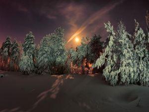 Snowy pines on a dark day