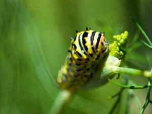 Caterpillar of exotic colors