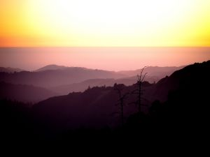 The skyline (La Honda, California)