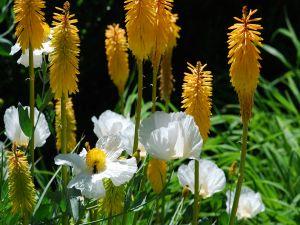 Floral nook
