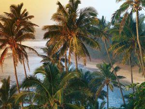Palm trees on the Kauai coast (Hawaii)