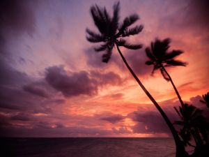 Palm trees over a red sky, in Punta Cana, Dominican Republic