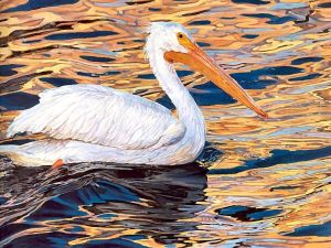 Painting of a white pelican