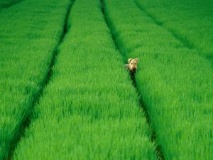 A dog in the green grass