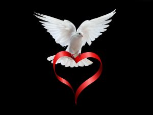 Pigeon over a heart