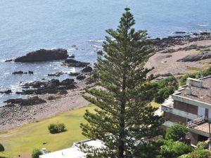 A beautiful pine near the sea