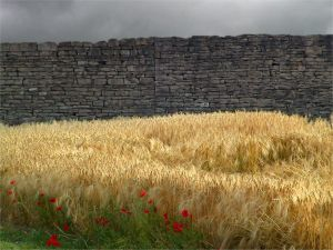 Wheat and poppies alongside a stone wall