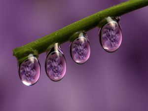 Flowers reflected in the dewdrops
