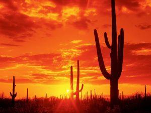 Red sky in a desert of Arizona