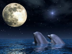 Dolphins to the moonlight