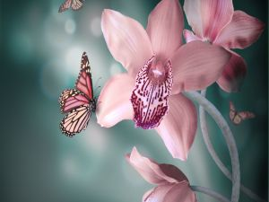 Butterfly on a pink orchid