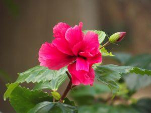 A beautiful carnation