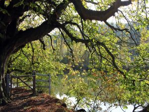 Tree on the banks of a river