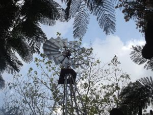 Windpump surrounded by trees
