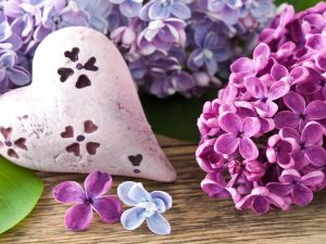 Lilac flowers and a white heart