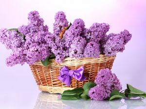 Lilac flowers in a basket