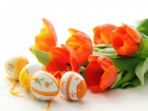 Easter eggs and orange tulips