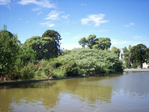 Little lake of the Buenos Aires Centennial Park (Argentina)