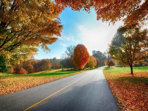 Road crossing a green landscape