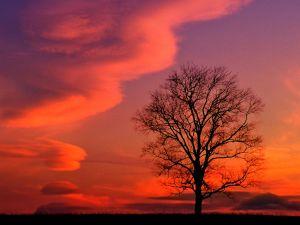 Tree under twilight