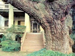 A centenary trunk