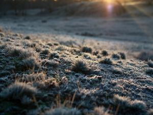 Frost of the morning