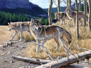 Painting of wolves by Al Agnew