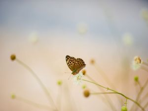 Butterfly on the end of a flower