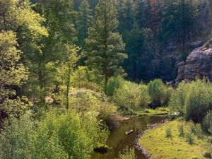 Creek passing through a forest in Arizona (USA)