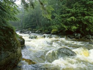 Salmon river on Princess Royal Island (British Columbia, Canada)