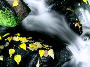 Flowing Water, in Mammoth Mountain, California
