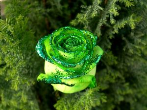 Green rose with glitter