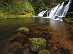 Waterfalls of white water (East Fork Coquille River, Oregon)
