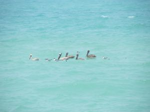 Conviviality of birds at sea