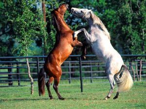 Horses standing