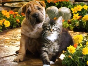 Dog and cat posing for photo