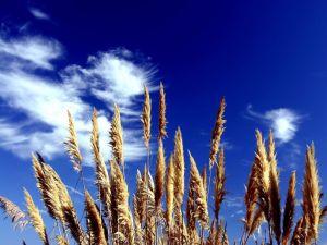 Herbs under a blue sky