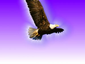 Eagle flying under a purple background