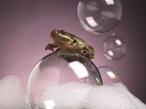 A frog on a soap bubble
