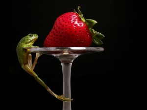 Frog trying to reach a strawberry