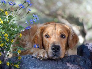 Sad looking dog